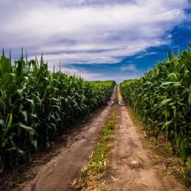 Investim în ferme cu sM 4.1?